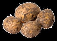Картофель весовой