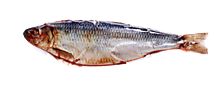 Сельдь «Рыбный ряд» слабосоленая, 0,4 - 0,6кг