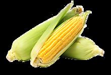 Кукуруза свежая, 1 шт