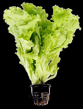 Салат в горшочке, 120г