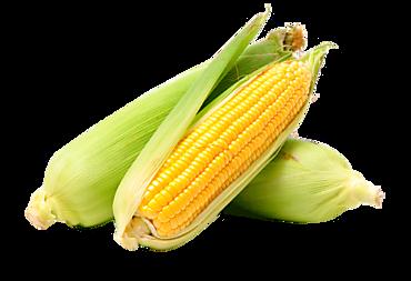 Кукуруза свежая поштучно, 0,2 - 0,6кг