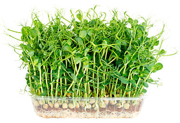 Микрозелень гороха, 70г